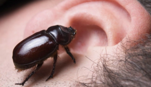 facebook insect bug in ear envy stress relief