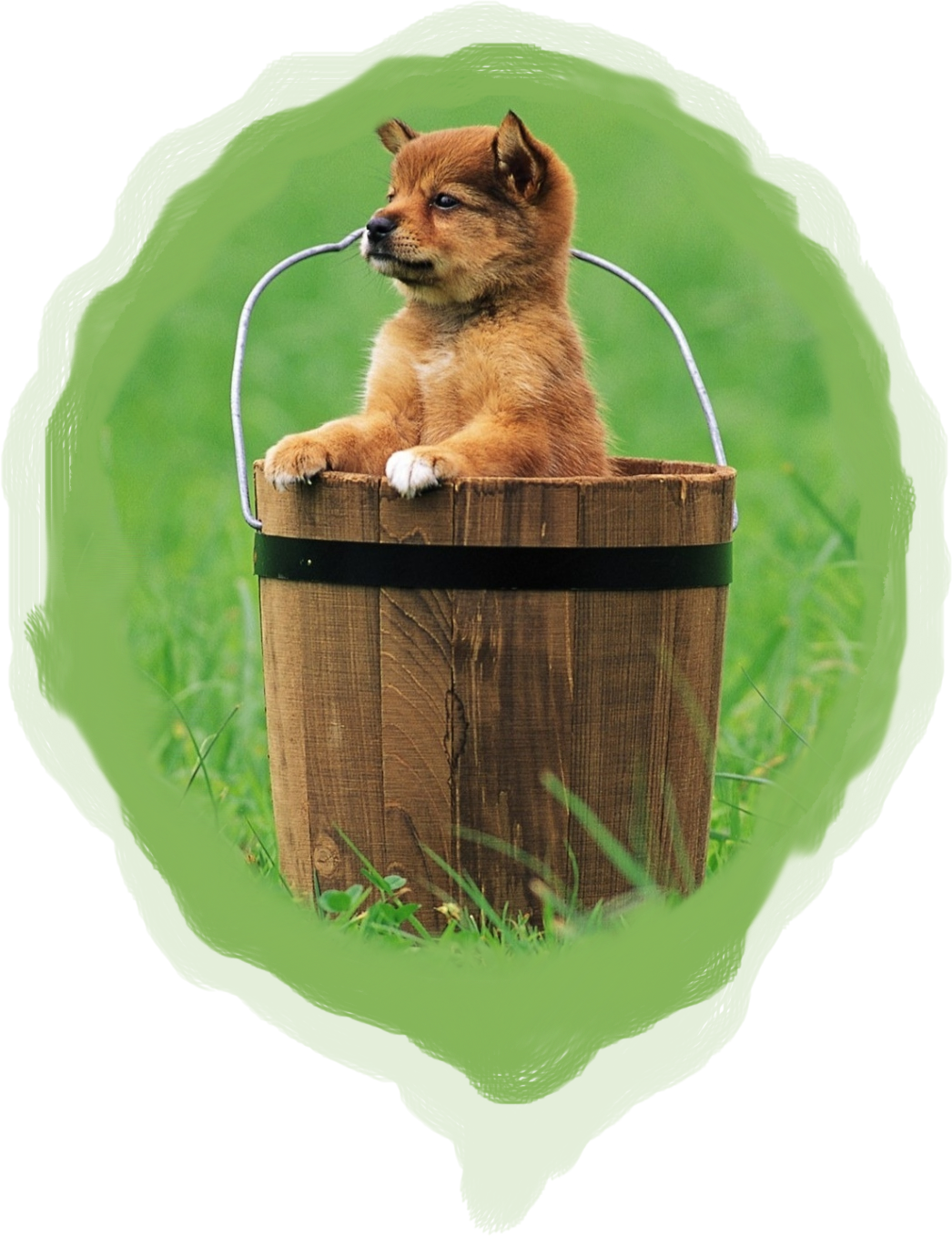 dungeons and dragons 5th edition homebrew bucket of puppies puppy